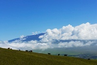 高原の牧草地から望むマウナケア山頂と雲と牧牛