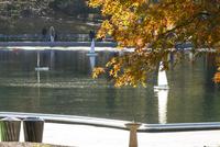 セントラルパーク紅葉越しの池に浮かぶラジコン ヨット