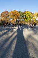 夕日に伸びる大木の影とセントラルパーク紅葉の木々