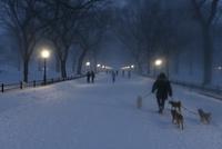 夕暮れ雪景色のセントラルパーク ザ モール 10266001685| 写真素材・ストックフォト・画像・イラスト素材|アマナイメージズ
