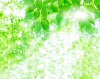 木漏れ日 10267000006  写真素材・ストックフォト・画像・イラスト素材 アマナイメージズ