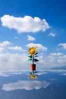 空と向日葵