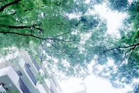 集合住宅と緑