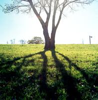 冬日が作る長い影