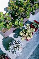 軒先で冬日を浴びるサボテンの鉢植え