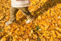 落ち葉の上を歩く日本人男の子の足元