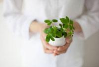 植物を持つ女性の手