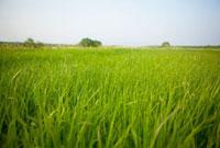 草原のイメージ