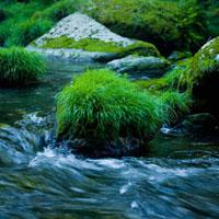 渓流と苔むした岩
