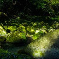 苔むした岩と木漏れ日