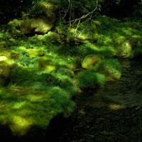 渓谷と木漏れ日