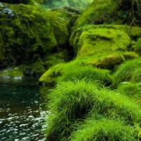苔むした岩と渓谷