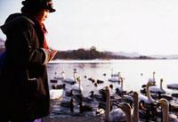 白鳥を眺める日本人の女の子