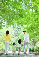 並木道を手を繋いで歩く日本人家族