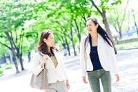 新緑の並木道を歩く2人のビジネスウーマン