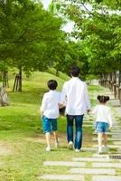 並木道を歩く日本人家族