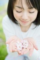 両手で桜の花を持つ日本人女性