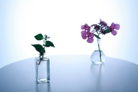花瓶とどくだみ草と紫陽花