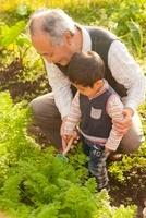 家庭菜園で野菜をとる祖父と孫 10272003715| 写真素材・ストックフォト・画像・イラスト素材|アマナイメージズ