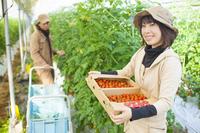 ミニトマトを持つ女性と収穫する男性