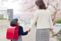 桜並木を歩く新入学の女の子と母親