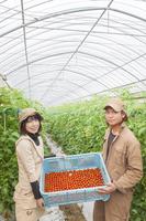 収穫したミニトマトのカゴを持つ男女