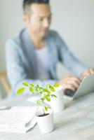 観葉植物とパソコンをする男性のシルエット