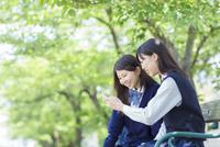 ベンチに座り携帯を見る2人の女子高生