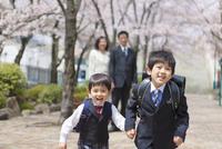 桜並木を走る兄弟と両親