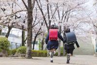 桜並木を走る小学1年生の男女