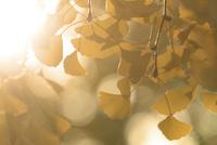 黄葉 10274012768| 写真素材・ストックフォト・画像・イラスト素材|アマナイメージズ