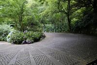 あじさいの咲く道 10277008391| 写真素材・ストックフォト・画像・イラスト素材|アマナイメージズ