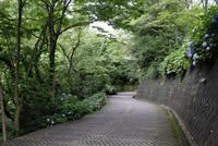 あじさいの咲く道 10277008425| 写真素材・ストックフォト・画像・イラスト素材|アマナイメージズ