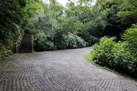 あじさいの咲く道 10277008480| 写真素材・ストックフォト・画像・イラスト素材|アマナイメージズ