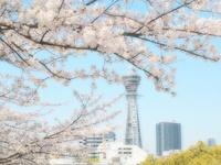 桜と通天閣