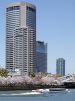 大川の桜と遊覧船