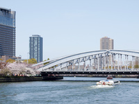 大川の桜と遊覧船と桜之宮橋