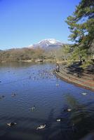三島池 10283001383| 写真素材・ストックフォト・画像・イラスト素材|アマナイメージズ