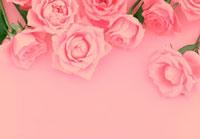 ピンクの複数のバラ 10285000009| 写真素材・ストックフォト・画像・イラスト素材|アマナイメージズ