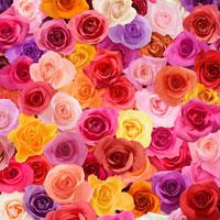 一面のカラフルなバラ