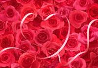 一面の赤いバラとリボン