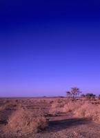 ネフド砂漠の朝