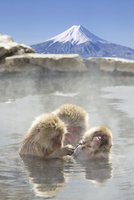 温泉猿と富士山