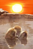 温泉猿と日の出