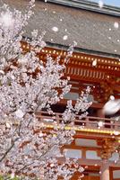下鴨神社と桜吹雪