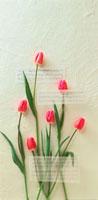 チューリップと楽譜 10291000086| 写真素材・ストックフォト・画像・イラスト素材|アマナイメージズ