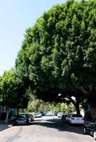 道路を覆い隠す緑の木々