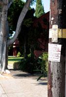 ローズウッドの電信柱