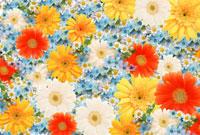 一面に敷詰められたガーベラと小花
