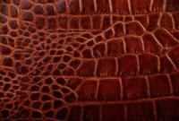 革 10298000596| 写真素材・ストックフォト・画像・イラスト素材|アマナイメージズ